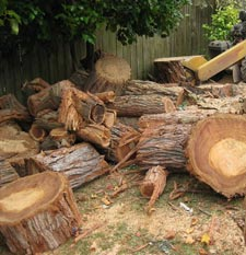 Stump Grinding Service Atlanta Georgia